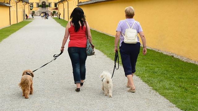 ismerkedés kutyasétáltatás